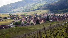 Alsace : la Véloroute du Vignoble • Un Tour A Velo Alsace, Parfait, Dolores Park, France, Travel, Veils, Grape Vines, Vineyard, Photography