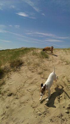 Www.Harrisons-dogs.co.UK  Dog walking services  #dogwalking #Balham #Clapham