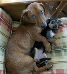 Snuggle Buddies❤