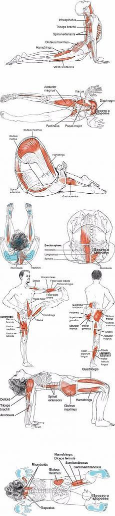 benefits of yoga Yoga Flow, Yoga Meditation, Ayurveda, Muscle Fitness, Health Fitness, Fitness Del Yoga, Yoga Information, Yoga Moves, Yoga Tips