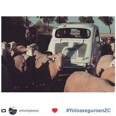 Las mejores fotos de nuestro concurso de Instagram: Mi clásico bien seguro   Bienvenido a una nueva forma de entender los seguros