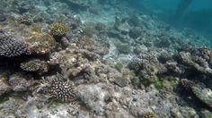 Maldivler gezimizin kısa bir özeti