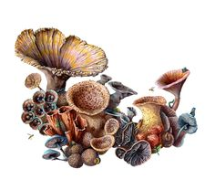 Watercolor painting of mushrooms and insects by Martha Iserman aka Big Red Sharks Studio Watercolor Images, Watercolor Paintings, Sharks, Natural History, Mushrooms, Insects, Studio, Big, Illustration