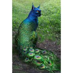 blue green colors peacock cats hybrid photoshop The pendulum of the mind alternates between sense and nonsense, not between right and wrong. Animals And Pets, Funny Animals, Cute Animals, Fantasy Kunst, Fantasy Art, Dark Fantasy, Animal Mashups, Magical Creatures, Real Mythical Creatures