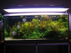 Akvarium 240l säljes 600kr (nytt ca 1200kr), snarast, säljer alla stora prylar till bra pris hemma pga flytt