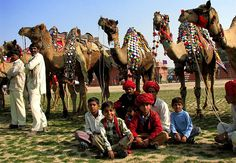 camel festival is a lively and colourful event organized in Bikaner by the Department of Tourism, Government of Rajasthan.