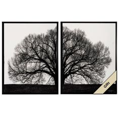 Propac Images 4583 Graphic Tree Image Art, Large, Black/White, Set of 2 Propac Images http://www.amazon.com/dp/B00GMN6G0C/ref=cm_sw_r_pi_dp_vhN.wb0H9AACZ