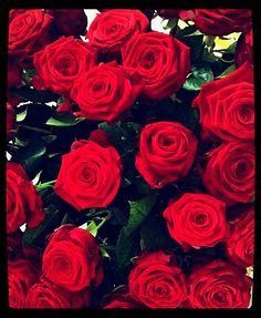 Rote Rosen sind schön anzusehen