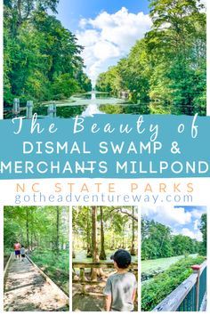 There is so much beauty to explore at Dismal Swamp State Park and Merchants Millpond in North Carolina. Plan your trip to these parks with our guide! North Carolina Day Trips, North Carolina Beaches, North Carolina Mountains, North Carolina Camping, Nc Beaches, Photography North Carolina, Hiking Places, Road Trip Destinations, United States Travel