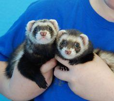 Animal Adoption, Pet Adoption, Animal Control, Ferrets, Losing A Pet, Shelters, Livestock, Guinea Pigs, Cute Cartoon