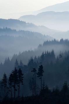 Mountain vista of trees.