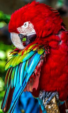 Colors by Dhafer Saad on - macaw Tropical Art, Tropical Birds, Exotic Birds, Colorful Birds, Exotic Pets, Parrot Pet, Parrot Bird, Cute Birds, Pretty Birds