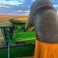 Combine during harvest Old John Deere Tractors, Big Tractors, Case Ih, New Holland, Cow Shed Design, John Deere Combine, John Deere Equipment, Heavy Equipment, Welding Rigs