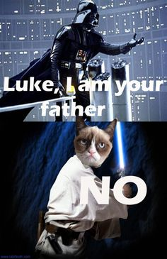 It's funny. But because Tardar is a female cat. SO...she's actually just being helpful to him who is obviously blind and doesn't know she's Leia. [shrug]