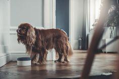Denjo Dogs - Dog Bowl from Mateus Ceramics. Food Bowl, Doge, Dog Bowls, Interior, Portugal, Animals, Trends, Design, Dog