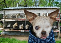 1. Please, write your lawmakers! Putting an end to puppy mills starts with YOU! Starting at the most local level of government, you have the ability to spread this message and raise awareness with...