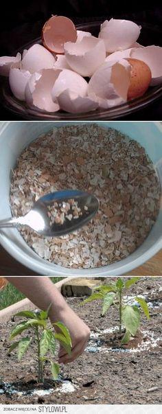Na ślimaki....skorupki jajek na Stylowi.pl