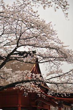 Photos of the Hanami in Fujinomiya