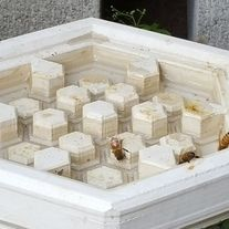 This is a Gen 3 Hydro Hive, a honey bee watering station. The pillars are designed to give honeybees a place to land as the water recedes to water themselves. Water is a necessity for the hive; The water keeps the bees healthy, can be used to thin out the honey, and helps to regulate the temperat...