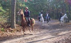 Everything You Ever Wanted To Know About Endurance Riding. Comes with a training program as well