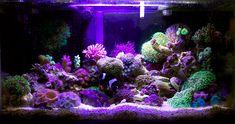Amazing 6gal pico-reef.  Beautiful!