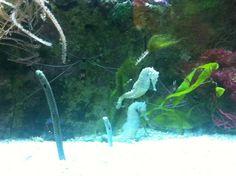 Frankfurt, Aquarium, Aquarium Fish Tank, Aquarius, Fish Tank