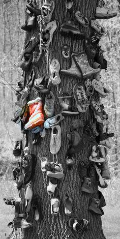 Shoe tree / Tronco de Árbol con Zapatos