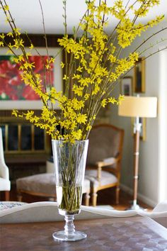 how to force forsythia