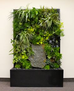 Our First Living Wall