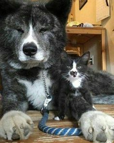 Cute Overload: Internet`s best cute dogs and cute cats are here. Aww pics and adorable animals. Cute Funny Animals, Cute Cats, Beautiful Cats, Animals Beautiful, Beautiful Couple, Animals And Pets, Baby Animals, Amor Animal, Photo Chat