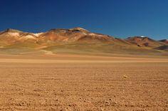 O deserto florido, no Chile