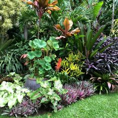 Super Garden Tropical Landscaping Pools Ideas Best Picture For tropical garden ideas perth For Your Tropical Garden Design, Tropical Backyard, Backyard Garden Design, Tropical Landscaping, Landscaping Plants, Backyard Ideas, Landscaping Ideas, Desert Backyard, Backyard Cottage