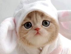 #cat #kitty underpants or bunny ears on head too cute for words need to kiss nose very much   Check out awesome Cat Tees at http://presentpuppy.com/cats/