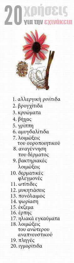 Infographic: 20 χρήσεις για την εχινάκεια http://www.healthpositive.gr/rotatofarmakopoio/einai-epikindini-echinakeia/