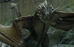 Harry's dragon is a Hungarian Horntail, the scariest and meanest dragon of the bunch.