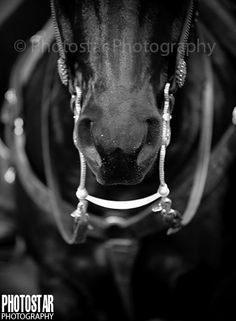Fearless Champion. Texas Tech University. Masked Rider.   © Photostar Photography {www.photostarphotography.com}