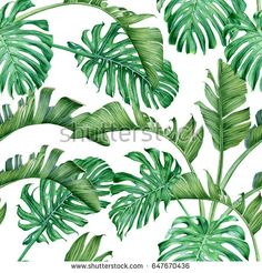 Palm leaves and monstera. Rainforest. Watercolor seamless pattern.