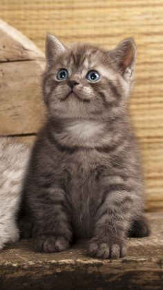 full HD potose on full screen new foto on 2019 Cute Cats And Kittens, Kittens Cutest, Cat App, Cat Photography, Beautiful Cats, Cat Breeds, Funny Cats, Cat Lovers, Cute Animals