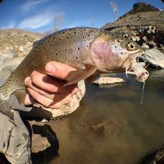Low water streamer action - Fishwest
