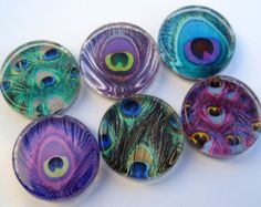 Peacock Feather Magnets - Glass Magnets - Set of Six One Inch Magnets