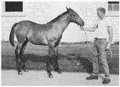 Triple Crown Winner Settle Slew as a foal.