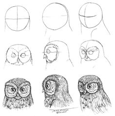 How draw an owl Baby Owls in 2019 Drawings, Animal drawings how to draw an owl - Drawing Tips Pencil Art Drawings, Bird Drawings, Art Drawings Sketches, Easy Drawings, Animal Drawings, Owl Art, Bird Art, Arte Gcse, Owl Sketch