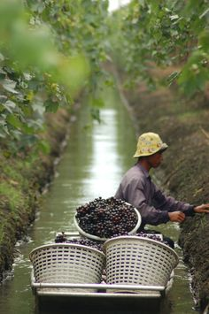 Water and wine - floating vineyards in Thailand | Carmen Roberts, MobyPictures