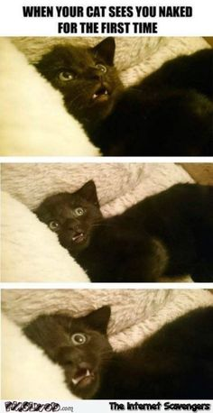 25 Cat Memes Thatll Tickle Your Whiskers Animals - . - 25 Cat Memes Thatll Tickle Your Whiskers Animals – …- 25 Cat Mem - Funny Animal Jokes, Funny Cat Memes, Cute Funny Animals, Funny Animal Pictures, Cute Baby Animals, Funny Cute, Cute Cats, Funny Pics, Scary Funny