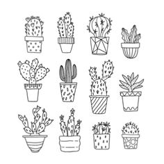 B&W cactus drawing