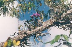(s.25-04-15).Arreglando mis orquídeas y bromelias en la cerca