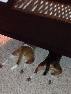 38 Dogs Who Suck At Hide-And-Seek- This view is a common occurrence at my house...