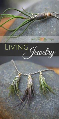 Gorgeous living jewelry made from air plants