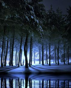 Reflections of winter woods at night snow