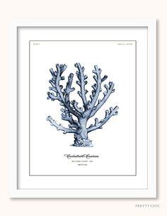 Vintage Blue Coral Print - Antique illustration - Natural History Illustration - Coral Art - Sea Life - Shells - Nautical Art